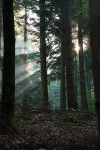 Licht aus der Natur